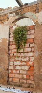512px-Wall_climbing_plant