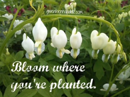 BloomWherePlanted